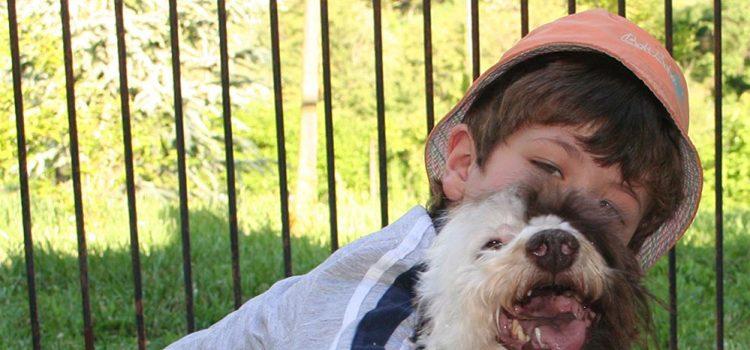 I box delle pensioni per cani autorizzate non sono gabbie